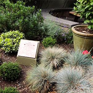Trnquility Garden