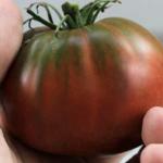 Cherokee Chocolate Tomato