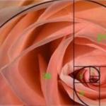 mathematical rose