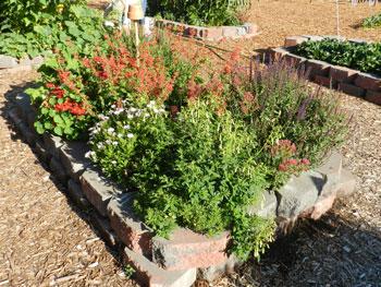 School Garden Bed with Flowers